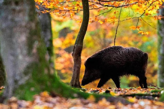 Jäger dürfen nun auch Nachtsichtgeräte einsetzten