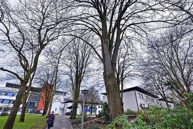 89 Bäume fallen für die Kinderklinik