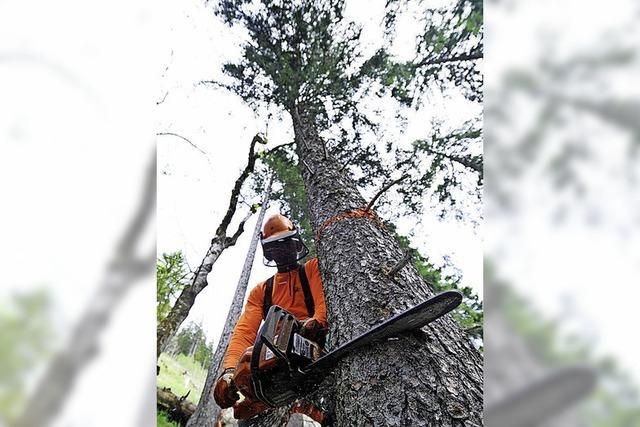 Holzaufarbeitung nach dem Sturm