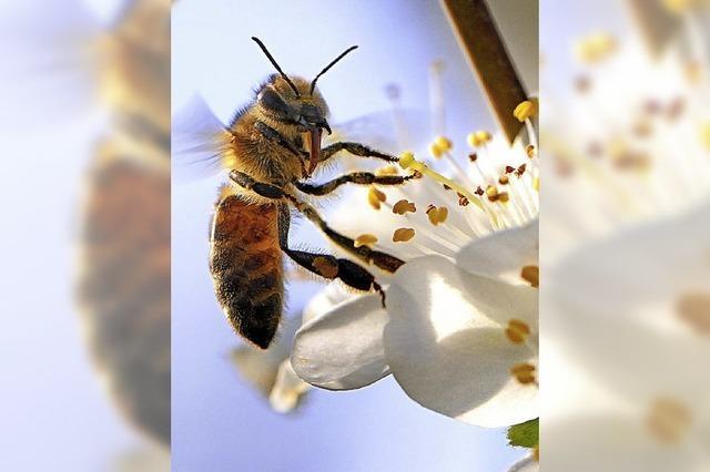 Die FDP fordert eine kommunale Initiative für mehr Artenvielfalt