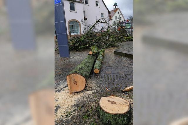 Bäume sind weg