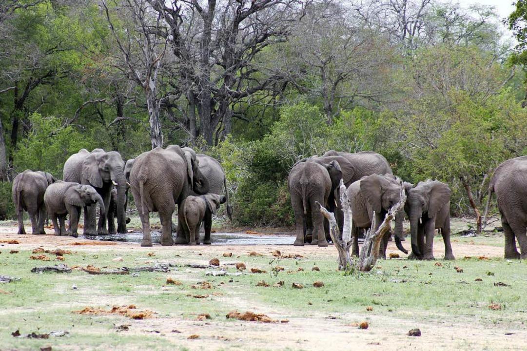 Ein Elefantenparadies: Dank vieler Was...Nationalpark heute wieder 17000 Tiere.  | Foto: Wolfgang Grabherr