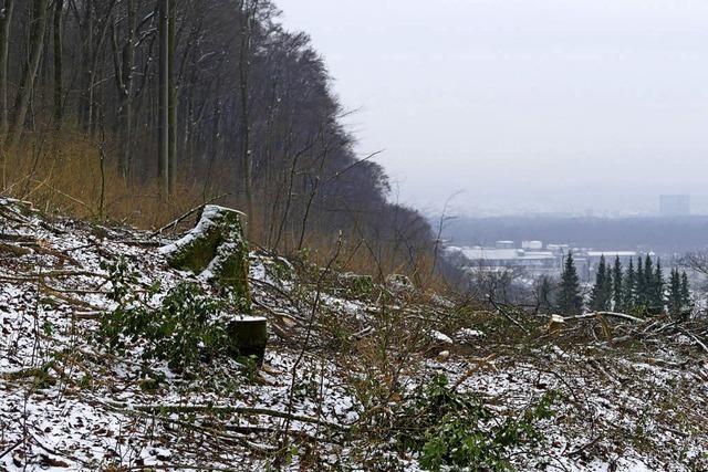Dem natürlichen Wald eine Chance geben