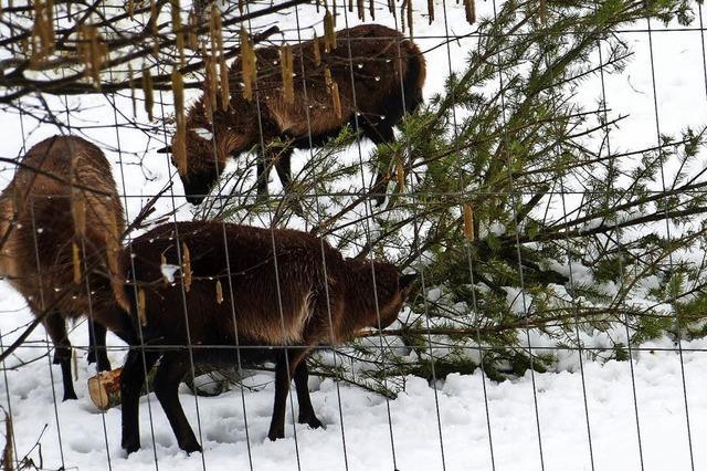 Ende eines Weihnachtsbaums