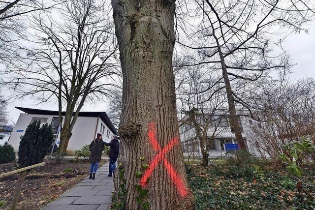 Für Freiburgs neue Kinderklinik werden ab Freitag 89 Bäume gefällt