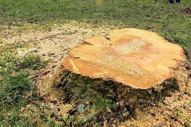 Wann kann man eigentlich einen Baum verpflanzen statt fällen?