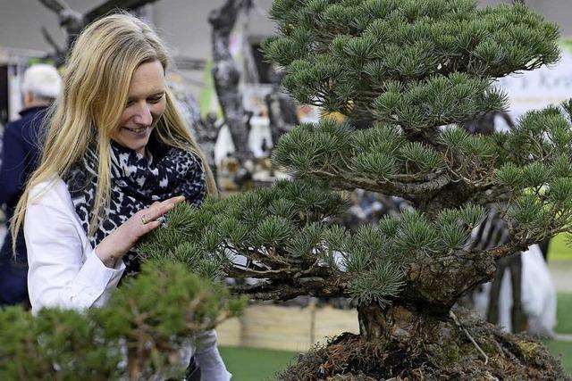 """Bei der Gartenmesse """"Gartenträume"""" stellen Landschaftsplaner, Gärtner und Künstler aus"""