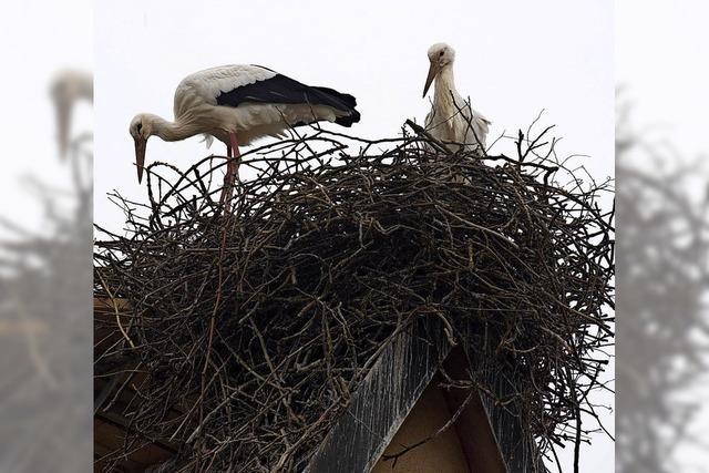 Feuerwehr hilft bei Rückkehr ins Nest