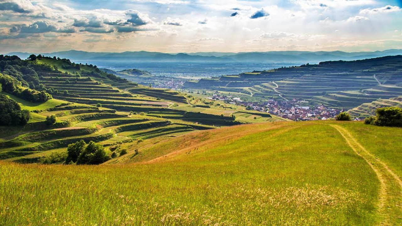 Auch in diesem Jahr bietet das Naturze...tige Naturlandschaft des Kaiserstuhls.  | Foto: Sebastian Schröder-Esch