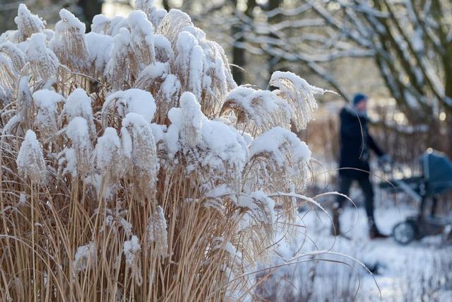 Fotos: Eine Arktische Kälte zieht über Europa