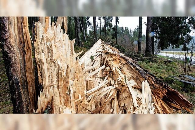 Nach dem Sturm: Schäden in Schopfheims Wäldern sind überschaubar