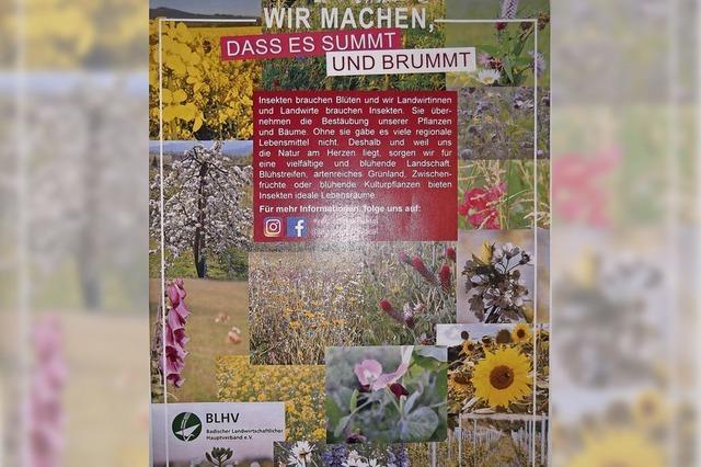 Lebensraum für Insekten durch Blühstreifen