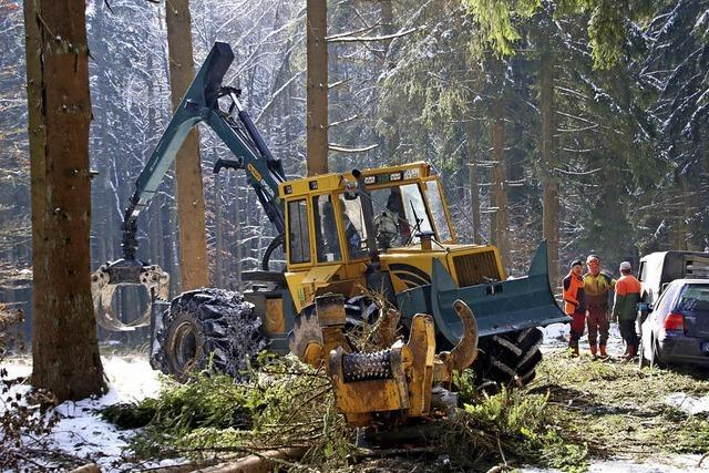 Auf der Länge fallen die ersten Bäume
