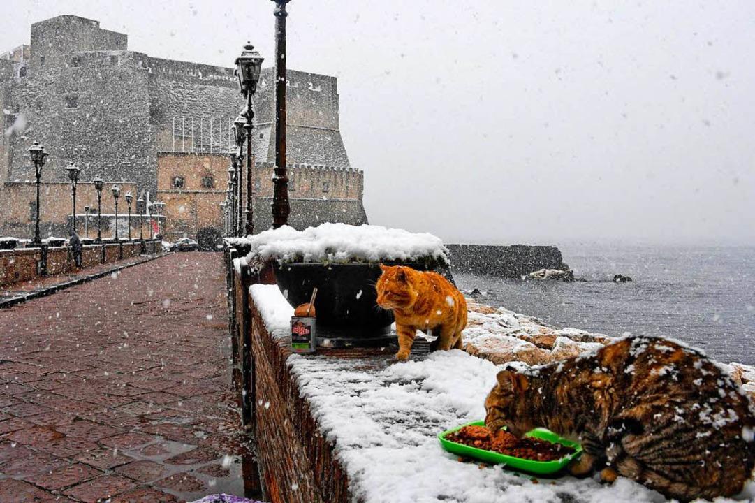 Auch für die örtlichen Streuner ein un... Neapel war am Dienstag schneebedeckt.    Foto: dpa