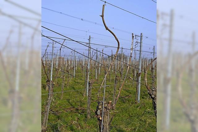 Badischer Weinbautag am 15. März in Offenburg