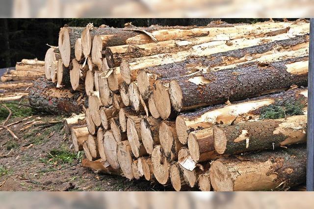 Kein Rundum-Sorglos-Paket im Forst