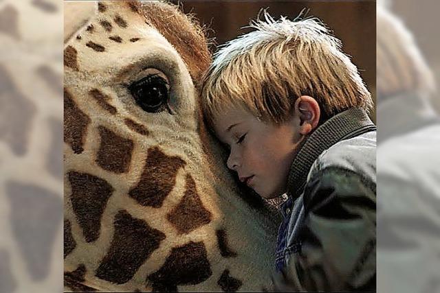 Die sprechende Giraffe