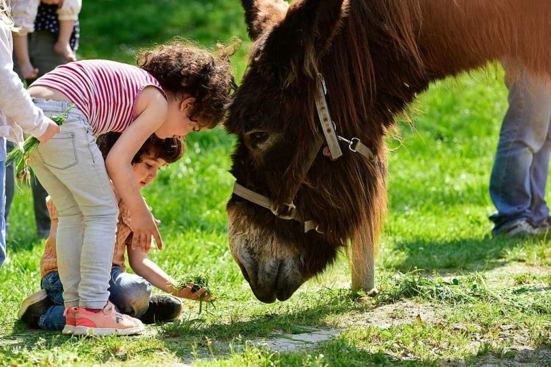 Kontakt aufnehmen im Tier-Natur-Erlebnispark Mundenhof in Freiburg.  | Foto: Thomas Kunz