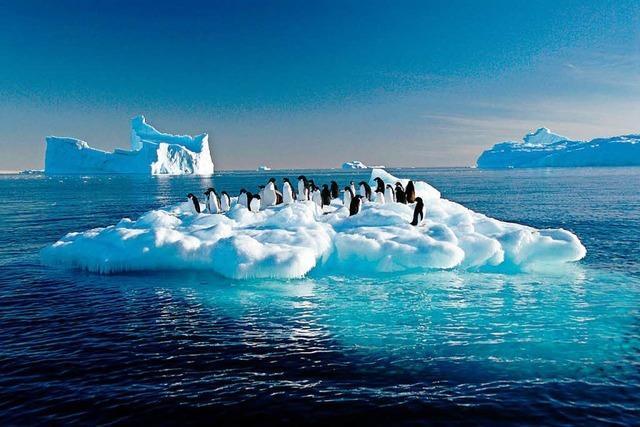 1,5 Millionen Adeliepinguine auf abgelegenen Inseln in der Antarktis entdeckt
