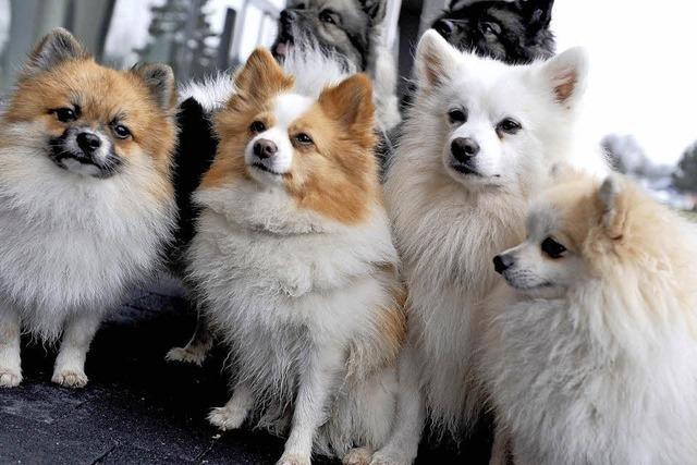 Hunde und Katzen, Messe in der Oberrheinhalle
