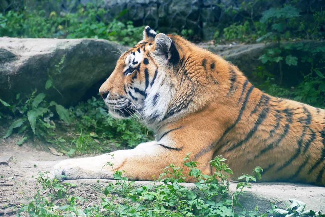 Wilde Tiere sind besonders beeindrucke...leiner sind als die Bewohner des Zoos.  | Foto: Silke Kohlmann