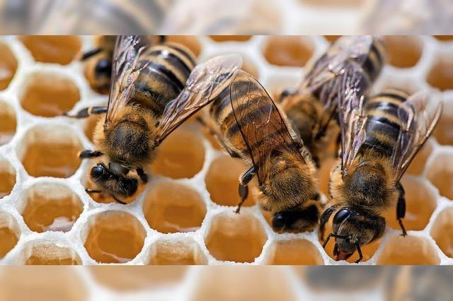 Bienenzüchter sehen gute Zukunft