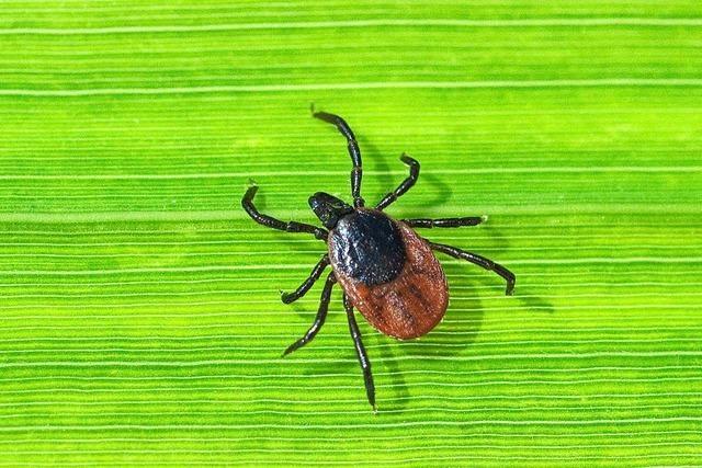 Was man über Zeckenstiche und das FSME-Virus wissen muss