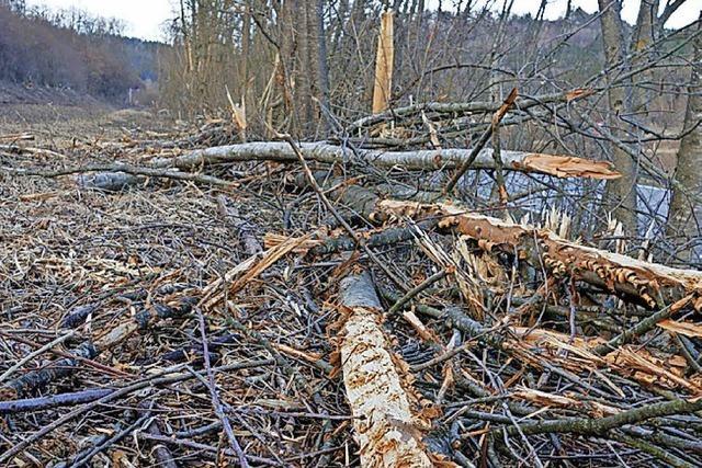 SCHAU MAL: Wie die Axt im Walde