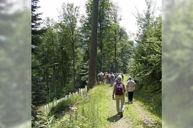 Ein Wald, der vielen Interessen dient