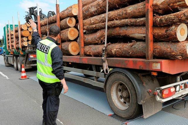 Zu viel Holz: Polizei stoppt überladene Transporter und lässt einen Teil der Stämme abladen