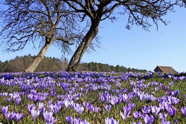Dem Frühling auf der Spur