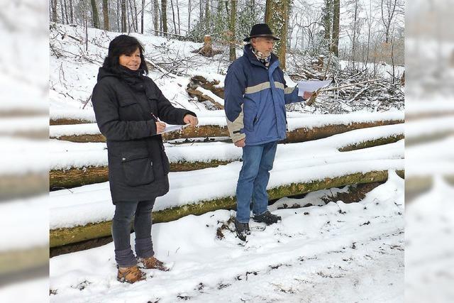 Kalte Holzversteigerung