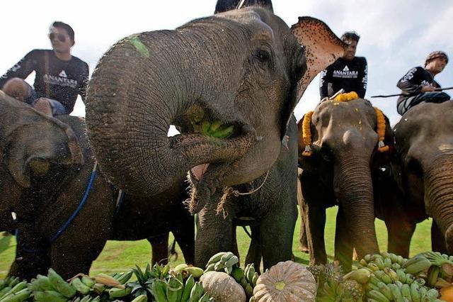 Alljährliches Elefanten-Polo in Bangkok