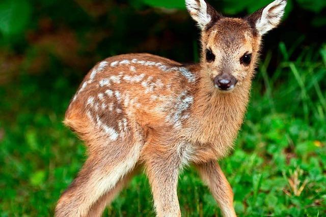 Naturschützer mahnen zur Rücksicht auf Tiere im Frühling