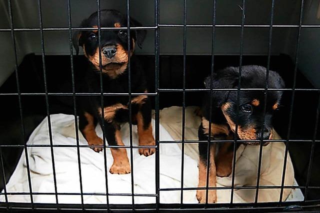 Mehr illegaler Handel mit geschmuggelten Hundewelpen