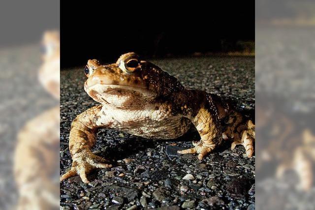 Leiteinrichtung für Amphibien sorgt für Diskussion