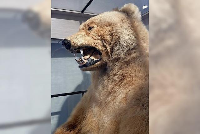 BZ-SERIE: Das Fell des alten Bären steckt voller Arsen