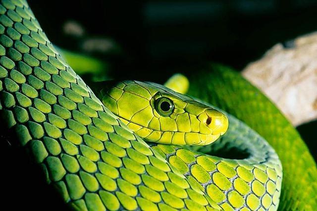 Was soll man nach einem Schlangenbiss tun?