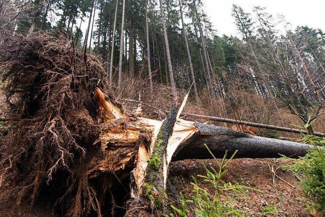 Trotz der Stürme bleibt der Holzpreis stabil