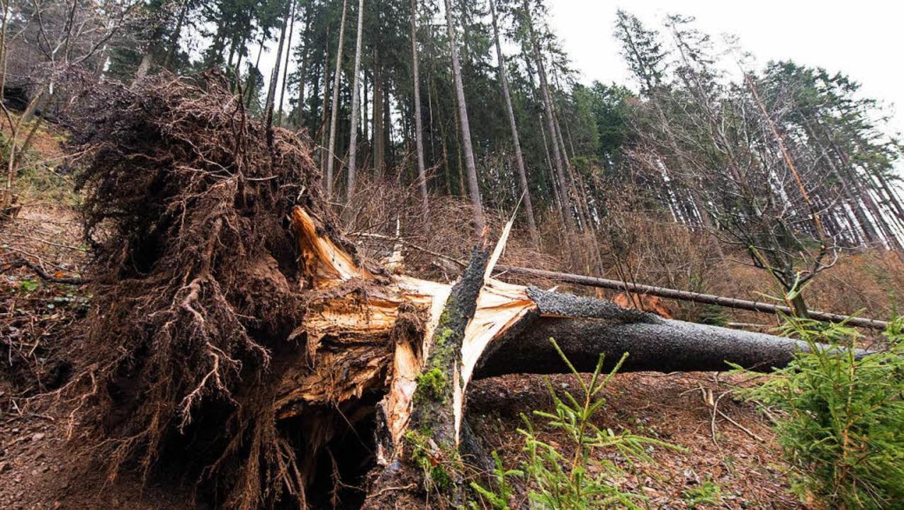 Trotz Der Stürme Bleibt Der Holzpreis Stabil Wirtschaft Badische