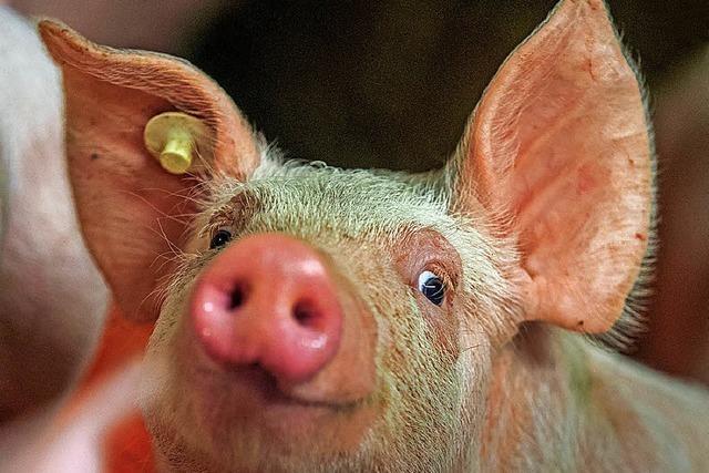 Bauern schlagen neues Fleisch-Label vor