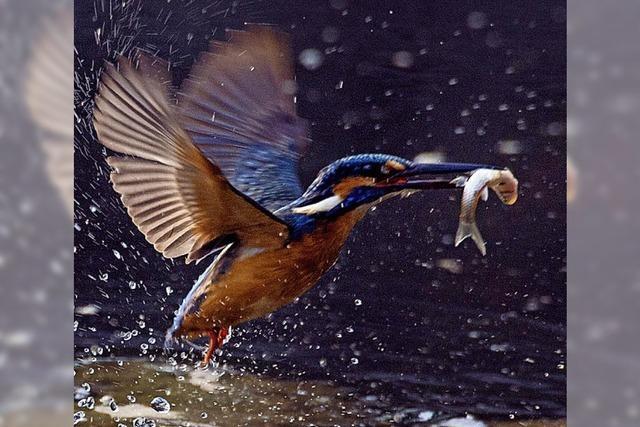 Artenschutz bringt Öko-Punkte