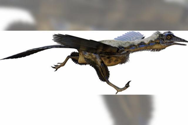 Archaeopteryx konntefliegen