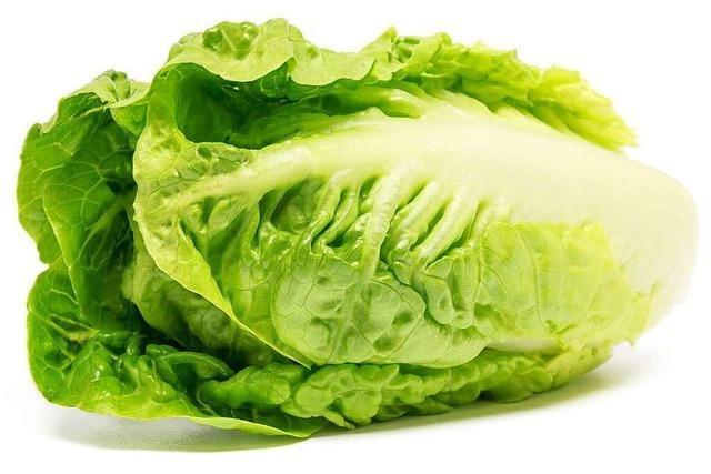 Knackig und herb-frisch: der Römersalat