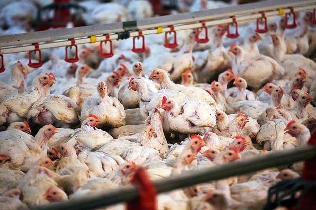 Greenpeace-Chefin: Billiges Essen ist zu teuer