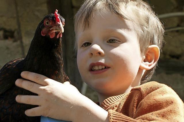 Hahn und Henne zum Anfassen