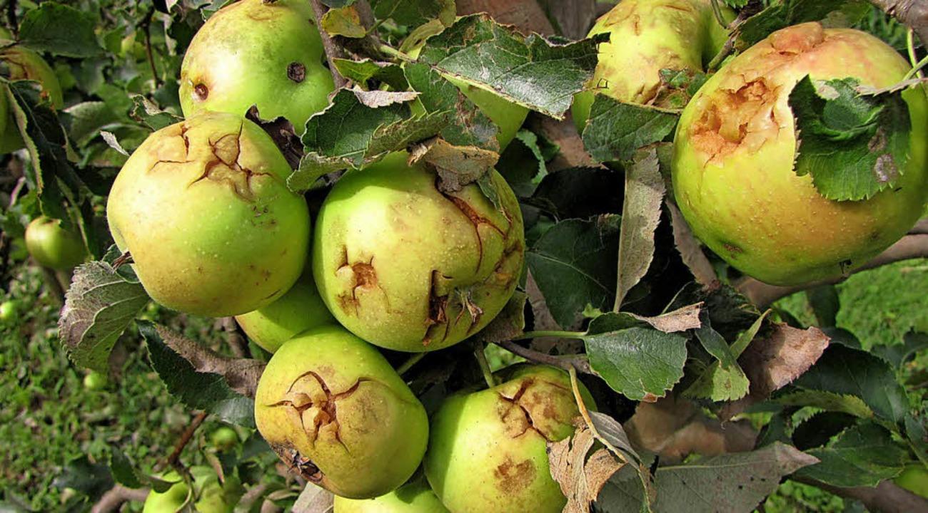 Auf dass im Obst- und Weinbau Hagelsch...n Flugzeuge mit Fackeln ausgestattet.   | Foto: Archivfoto: LRA
