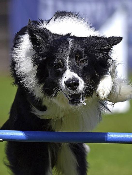 Sport für Hund und Mensch – Agility macht beiden Spaß  | Foto: Privat