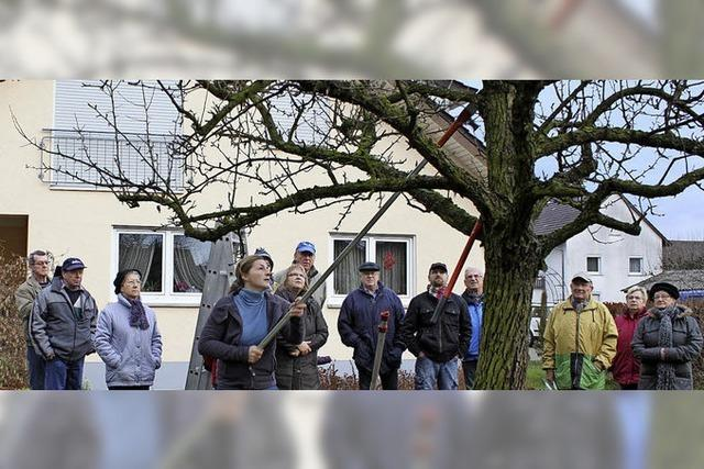 Hobbygärtner wollen Gartenschau als Chance nutzen