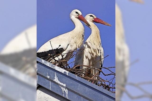 Nest sorgt für Unmut